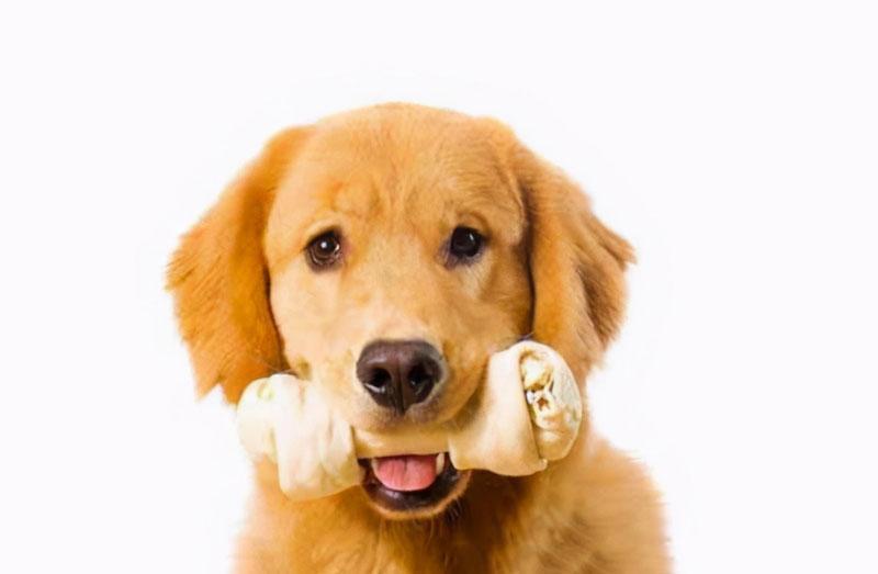 Sử dụng các loại xương canxi được sản xuất dành riêng cho chó